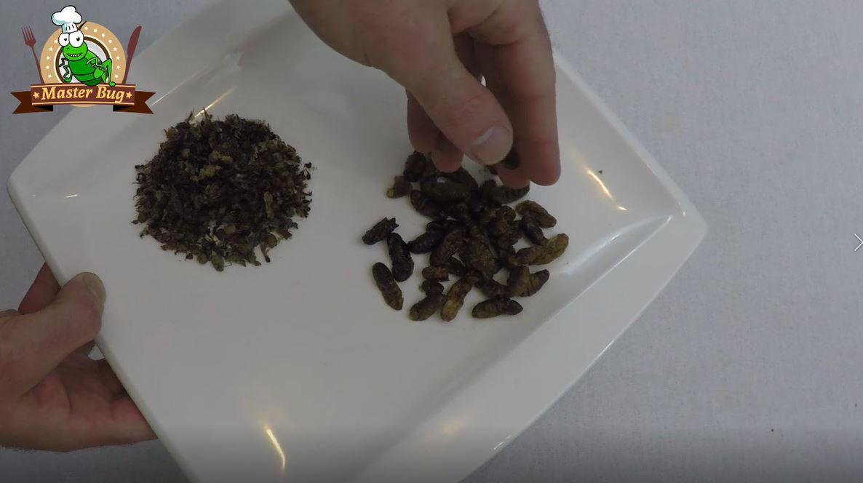 Ultime tecnologie in cucina la teca per insetti e il nuovo